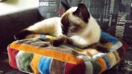 Лежанка для животных ′Пэчворк′ круглая для кошек и собак