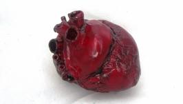 Анатомическое сердце в реальную велчину