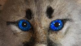 Котенок пумы, брошь валяная