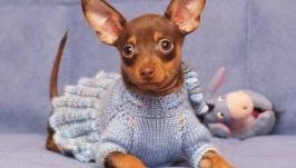 Вяжу на заказ для маленьких собачек