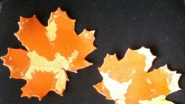 ′Золотая осень′ - декоративные блюдца