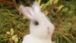 Кролик Зайка