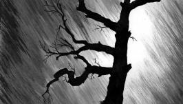 тут изображено Старое дерево в грозу