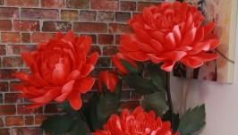 Интрьерный куст хризантем