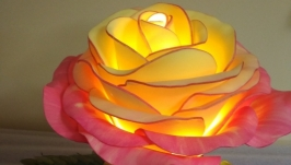 Роза двухцветная в горшочке