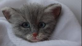 Брошь серый котенок