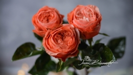 Пионовидная роза Кахала из фоамирана