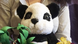 Панда в чашке