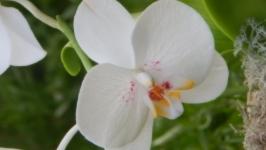 Цветы из полимерной глины ′Орхидея′