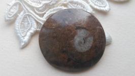 Аммонит (кабошон)