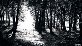 Солнечная поляна   The sunny Glade