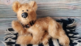 Собака тедди Тая
