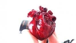 Открывное сердце с рамкой для фото Анатомическое сердце из полимерной глины