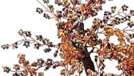 Бисерное дерево  ′Шоколад ′