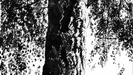Береза в летний день  The Birch on a Summer Day