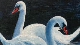 Mute swans. Eurasia