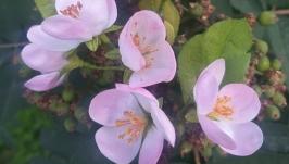 Весенняя брошь с яблоневым цветом на шляпой булавке