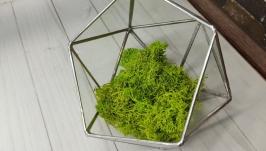 Glass florarium icosahedron