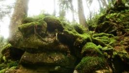 Лес – место вдохновения для творческих людей