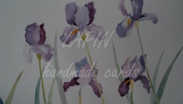 Картина Ирисы Акварель 30х40