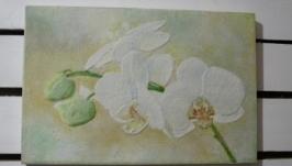 «Ніжна орхідея»