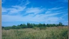 Фото картины: Карпаты и Природа поля