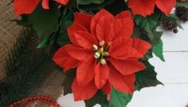 Різдзвяна квітка ′Пуансетія′