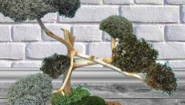 Подарок - натуральное лечебное дерево из Цетрарии