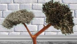 Подарок к празднику - Дерево из Кладонии и Цетрарии