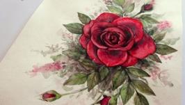 Картина акварель ′Алая Роза′