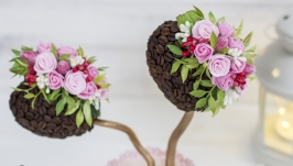 Нежное кофейное деревцо ′Два сердца′