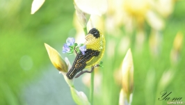 Брошь- птица из бисера, с пайетками и канителью ′Чижик′