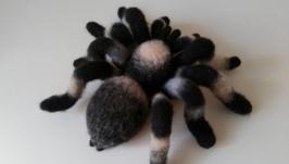 Паук большой,  тарантул полосатый