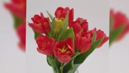 Тюльпаны из хлодного фарфора