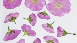 Гербарий для творчества сухоцветы купить онлайн