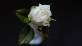 Брошь бутон белой розы