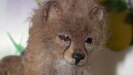 гепард котёнок