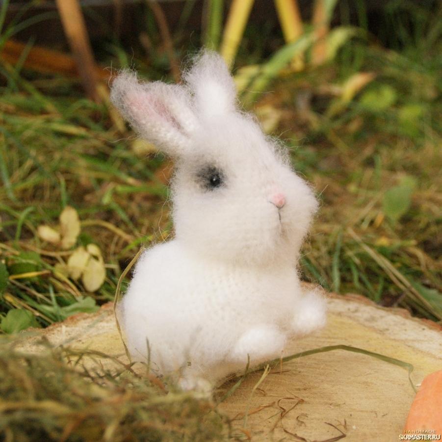 тут изображено Кролик Зайка