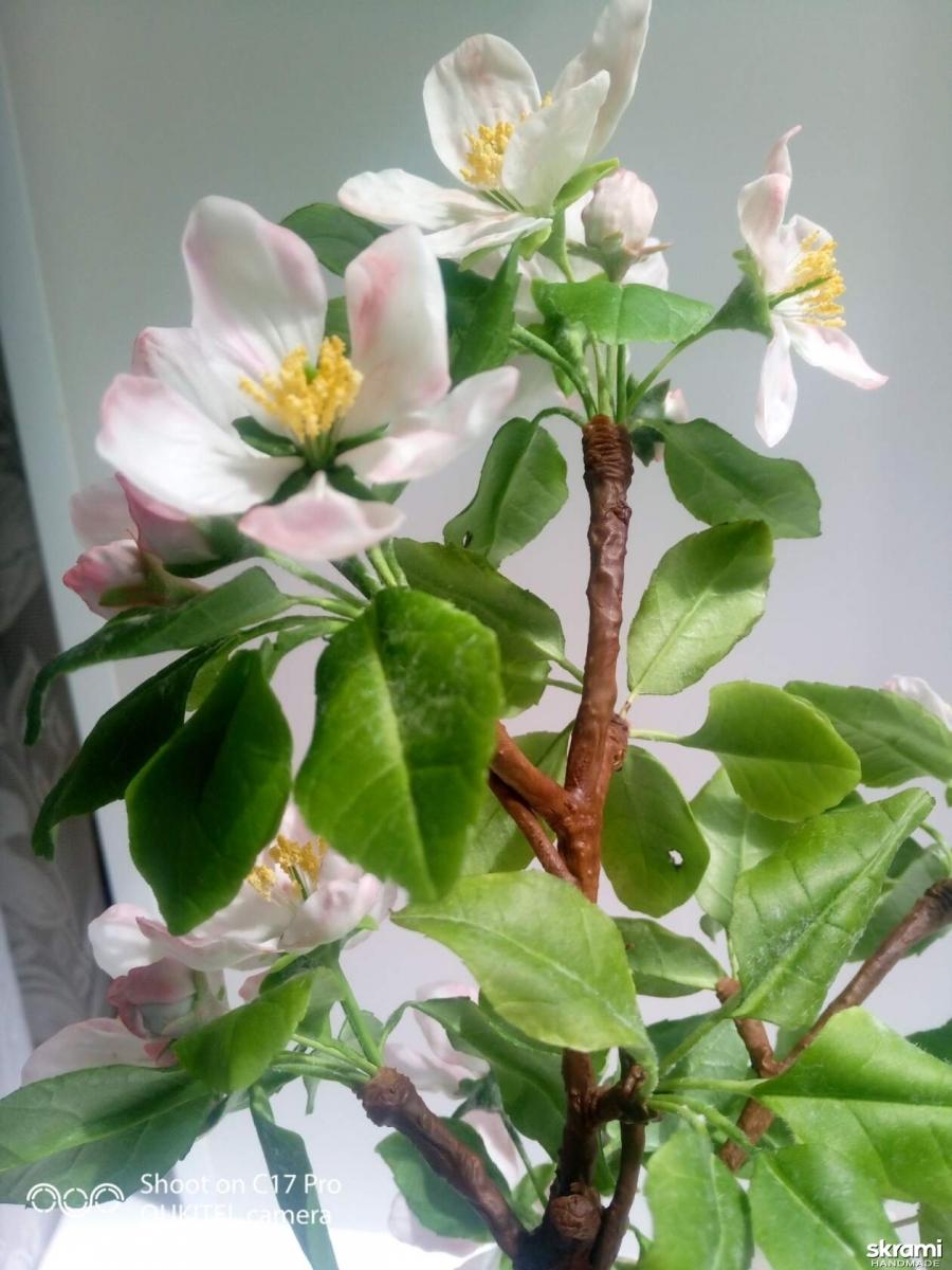 тут изображено Ветка яблони