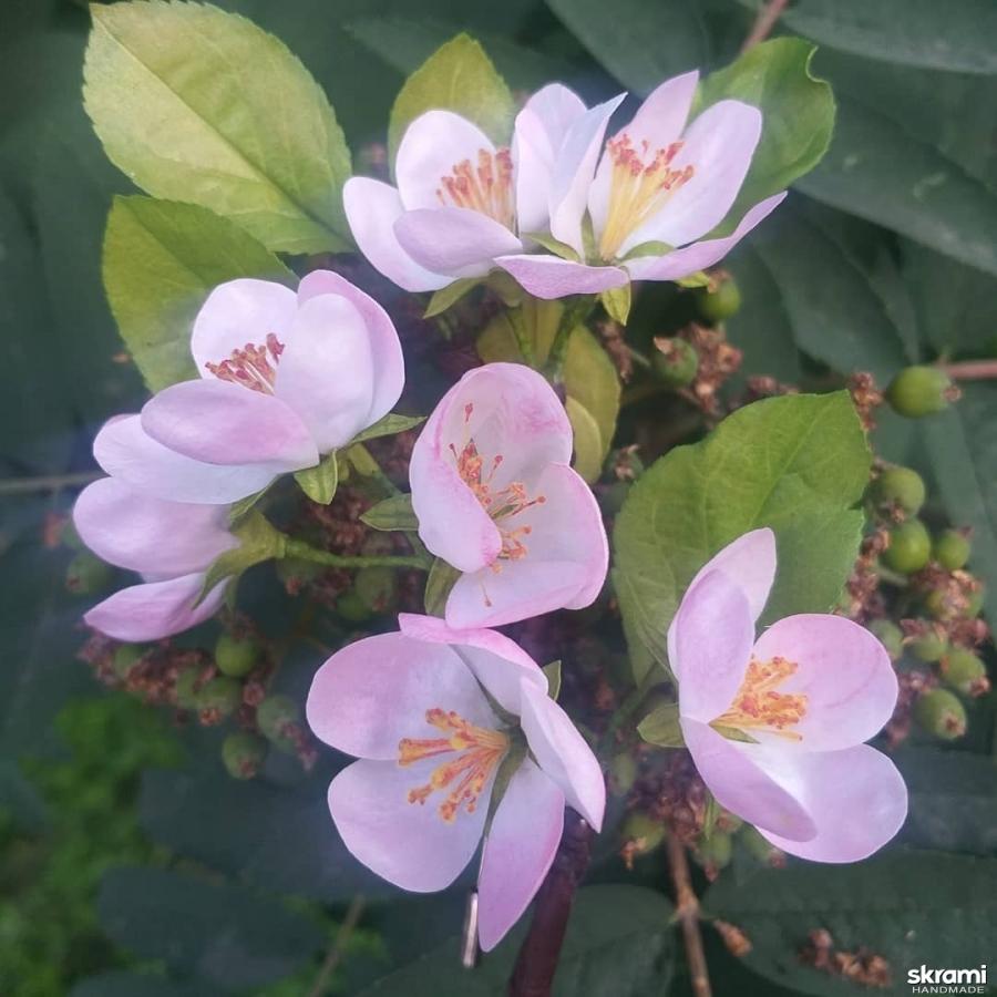 тут изображено Весенняя брошь с яблоневым цветом на шляпой булавке